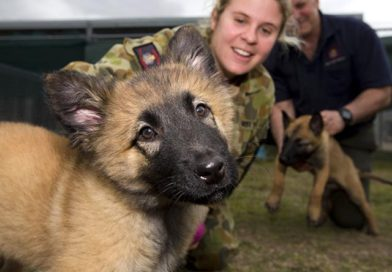 Minister praises families who foster puppies