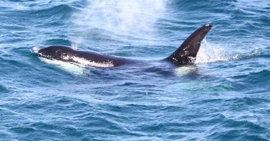 Orcas trump Facebook in a time-poor CONTACT office. Photo by Brian Hartigan.