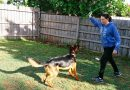 Boredom Busters: entertaining active dogs