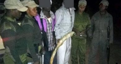 Akashinga warriors with two suspected poachers they arrested, with illegal ivory. IAPF photo.