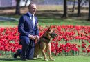 SAS dog awarded 'VC for animals'