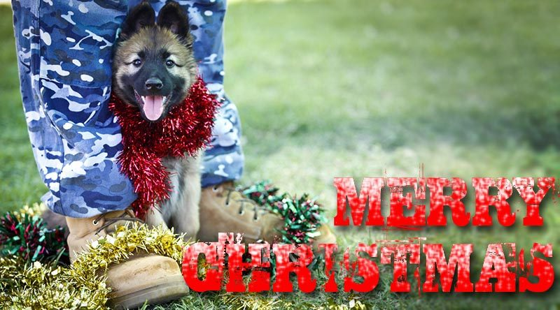 A Royal Australian Air Force puppy gets into the Christmas spirit at the RAAF Security and Fire School at RAAF Base Amberley. Photo by Corporal Jessica de Rouw.