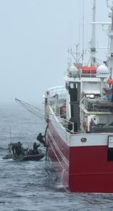 Fishery officers from the New Zealand Ministry for Primary Industries and crew from HMNZS Wellington board a fishing vessel in the Souther Ocean. RNZDF photo.