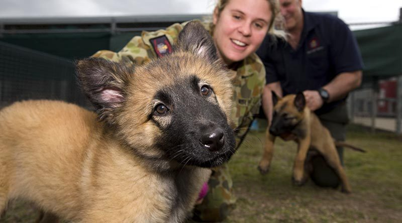 "Royal Australian Air Force puppy ""Prim"", a future military working dog, with Corporal Samantha Luck, from the Royal Australian Air Force Security and Fire School. Photo by Corporal Max Bree."