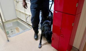 Fiji sniffer dog