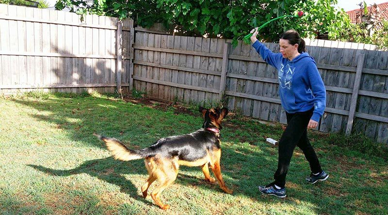 If you own a dog obsessed with fetch, plastic ball throwers are great
