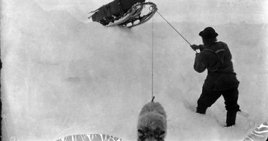 Fredrik Hjalmar Johansen pulling a sledge on the way south, together with his last dog, Suggen. One of the pictures from the expedition with arctic ship toward the North Pole in the period June 24, 1893 to August 13, 1896. According to the plan, the ship was to drift in the ice with the ocean current from the coast of Siberia across the North Pole to Greenland. In March 1895, Fridtjof Nansen, together with a companion, set out on a hazardous expedition with skis and dogsledges, in an attempt to reach the pole itself.