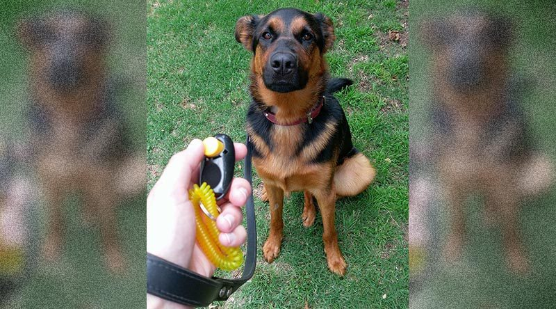 K9 marker training
