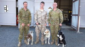 Australian Army soldier from the 2nd Combat Engineer Regiment (2CER) Sapper Dane Houghton and his Explosive Detection Dog Chaz, New Zealand Army soldier from the 2nd Engineer Regiment Acting Corporal Thomas Hynes and Chuck, and Sapper Mason Revell from 2CER and with Dexter at the Southport Army Depot. ADF photo.