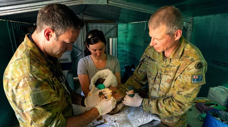 Australian Army veterinarian Captain Garnett Hall (left), Kangaroo Island Wildlife Park owner Dana Mitchell and Private Alexie Tarasov from the 10th/27th Battalion, Royal South Australia Regiment, bandage one of many koalas that suffered burns at the park during the bushfires. Photo by Corporal Tristan Kennedy.