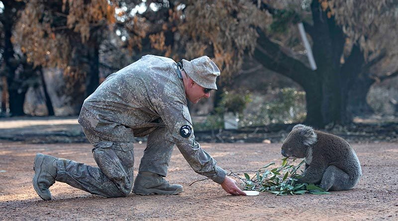A soldier from New Zealand Army's 2ER gives water to a Koala while the unit assisted ADF members at Kangaroo Island's Hanson Bay Wildlife Reserve.