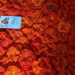 lisa_robson_matilda_poppies