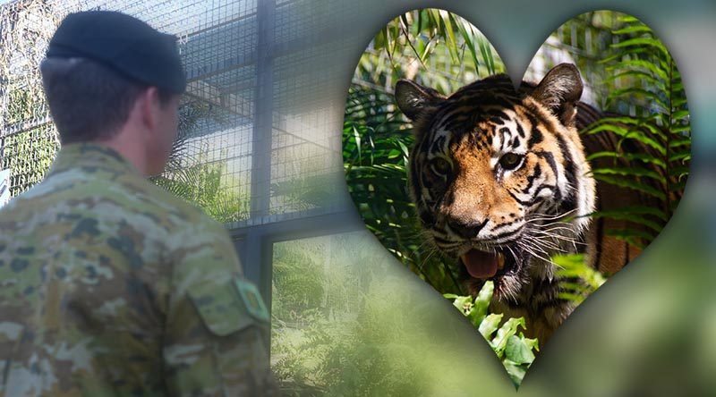 A soldier from 5RAR admires his unit's new mascot, Private Quintus Durga, a Bengal tiger, at Crocadylus Park, Darwin, Northern Territory. Photo by Lance Corporal Brendan Austin.