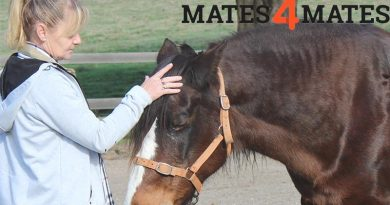 Mates4Mates offer five-day equine therapy programs, facilitated by Equine Encounters Australia, for both individual Mates and couples who have service-related physical injuries or mental illness.