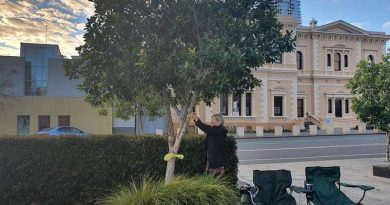 Julie-Ann Finney ties a yellow ribbon around a tree in Adelaide on World PTSD Awareness Day.