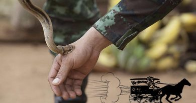A Royal Thai Army jungle survival expert demonstrates the bite of a non-venomous snake, to members of the 1st Battalion, Royal Australian Regiment, during Exercise Chapel Gold 2018 in Chiang Mai Province, Thailand. Base photo by Corporal Matthew Bickerton (digitally altered by CONTACT).