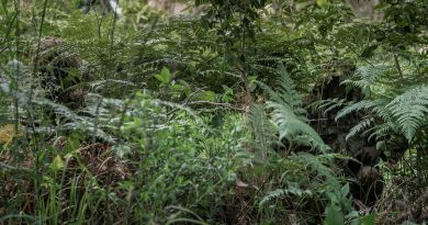 Soldiers from the 8th/9th Battalion, Royal Australian Regiment's Reconnaissance, Snipers and Surveillance Platoon demonstrate the use of camouflage and concealment in the Canungra Field Training Area. Photo by Private Jacob Hilton.