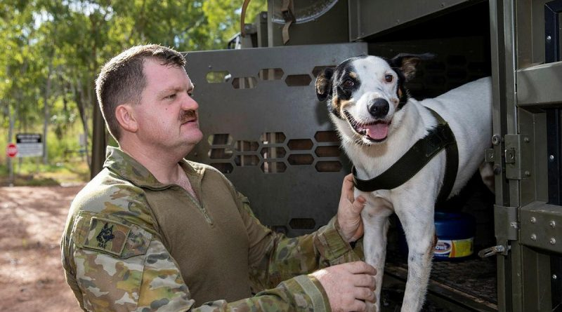 Explosive Detection Dog, Cheese, of the 1st Combat Engineer Regiment, and his handler Sapper Luke Saxton prepare for a search task during training at Kangaroo Flats Training Area, NT. Photo by Corporal Rodrigo Villablanca.