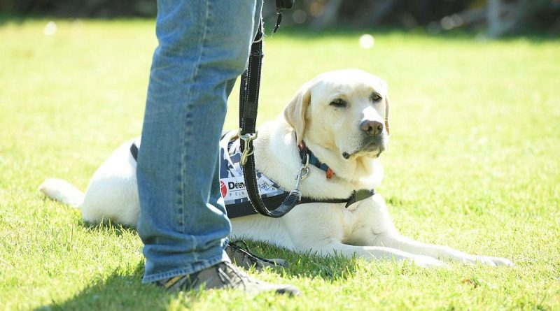 A Defence Community Dog visits Canberra to raise awareness of the Defence Community Dogs program.