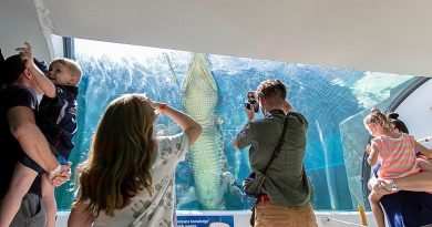 Visitors to Defence Community Organisation Crocosaurus Cove family day watch a saltwater crocodile swim laps in its tank in Darwin. Story and photo by Private Jacob Joseph.