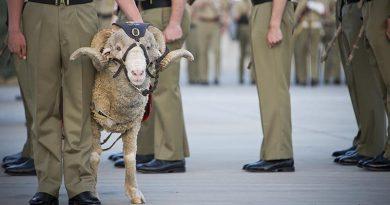 Battalion mascot, Corporal John MacArthur IV – aka 'Stan the Ram' – on parade to mark the 41st birthday of the Australian Army 8th/9th Battalion, Royal Australian Regiment, at Gallipoli Barracks in Brisbane. Photo by Corporal David Cotton.