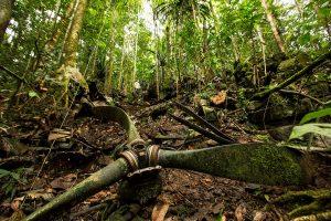 Wreckage from Catalina A24-50 lies scattered across a mountainside near Fakfak, Indonesia.